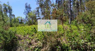 Terreno em Ansião com cerca de 2.5 Hectares